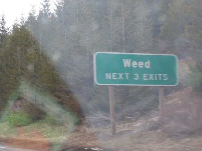 weed-road-sign